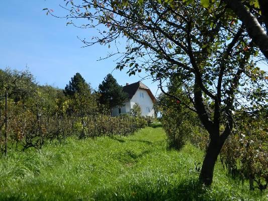Hongarije ~ Pannonia (West) ~ Baranya (P�cs) - Stenen woning -  (M21489)