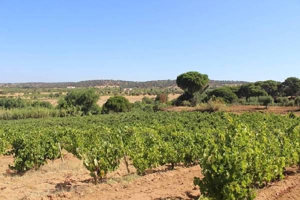Portugal ~ Beja ~ Vidigueira - (Woon)boerderij