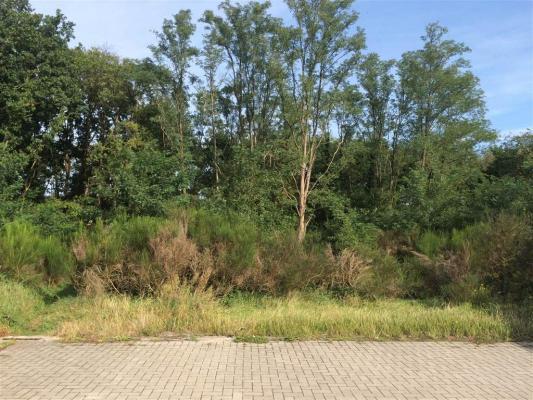 België ~ Vlaanderen ~ Limburg - Grond
