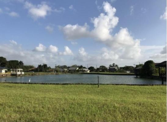 Suriname ~ Paramaribo - Grond