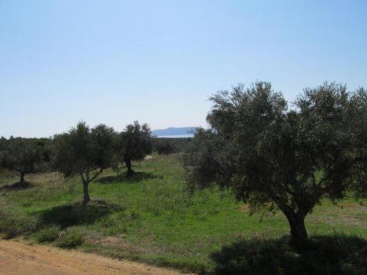 Griekenland ~ Peloponnese - Bouwgrond
