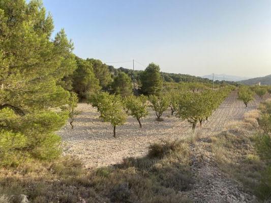 Spanje ~ Valencia (Regio) ~ Alicante (prov.) - Bouwgrond