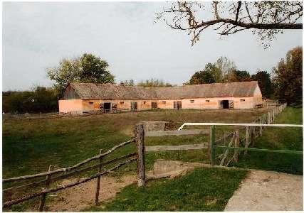 Hongarije ~ Pannonia (West) ~ Tolna (Szeksz�rd) - Paarden-object -  (M8389)