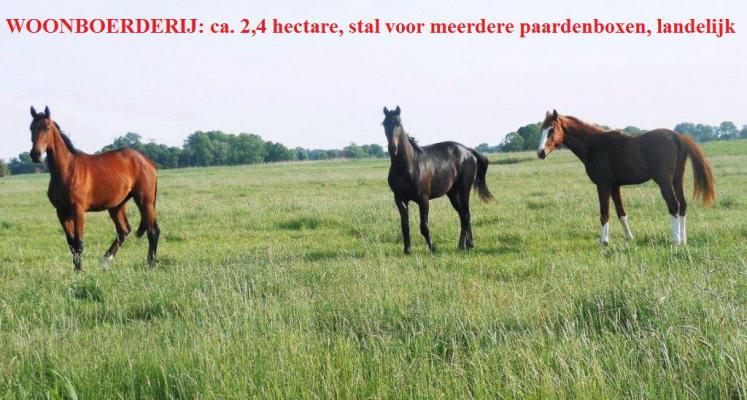 Duitsland ~ Nedersachsen ~ Oldenburger Land - (Woon)boerderij